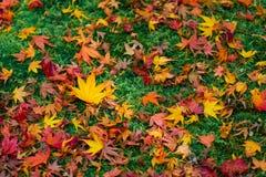 Le foglie di acero cadono al pavimento, autunno a Kyoto, Giappone immagine stock libera da diritti