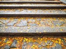 Le foglie di acero cadono sulle scale immagini stock