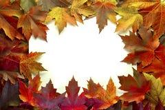Le foglie di acero miste caduta colora il bordo Immagini Stock Libere da Diritti