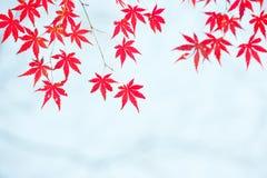 Le foglie di acero rosse nell'inverno illustrazione vettoriale