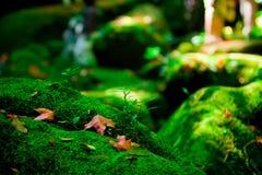 Le foglie di acero rosse si avvicinano alla cascata fotografia stock libera da diritti