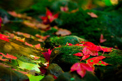 Le foglie di acero rosse si avvicinano alla cascata immagini stock libere da diritti
