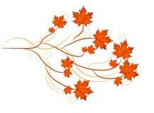 Le foglie di acero vector, tema di autunno con i rami e turbinii Fotografie Stock Libere da Diritti