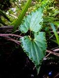 Le foglie di amore con inumidisce immagini stock libere da diritti