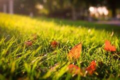 Le foglie di autunno Fotografia Stock