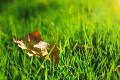 Le foglie di autunno Immagine Stock Libera da Diritti