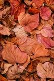 Le foglie di autunno accatastano su Immagini Stock