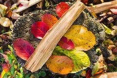Le foglie di autunno colora l'autunno variopinto giallo verde rosso di vita Fotografia Stock Libera da Diritti