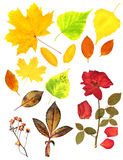 Le foglie di autunno ed asciugano rosa Fotografie Stock
