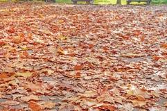 Le foglie di autunno gialle, arancio e rosse nella bella caduta parcheggiano Immagini Stock