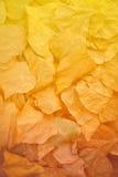 Le foglie di autunno gialle, arancio e rosse nella caduta parcheggiano Immagini Stock Libere da Diritti