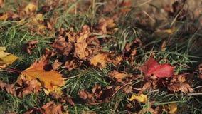Le foglie di autunno stanno cadendo tutt'intorno all'erba verde, tempo del vento video d archivio