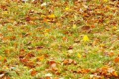 Le foglie di autunno su erba verde in città parcheggiano fotografia stock
