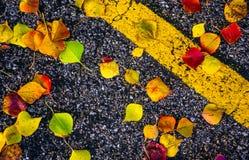 Le foglie di caduta cadono alla terra con pittura gialla Fotografia Stock
