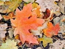 Le foglie di caduta della quercia e di Autumn Maple si chiudono su su Forest Floor su Rose Canyon Yellow Fork e sulla grande trac Fotografie Stock Libere da Diritti