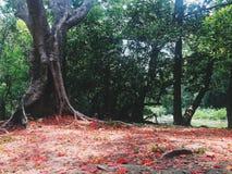 Le foglie di caduta di rosso Fotografia Stock Libera da Diritti