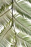 Le foglie di Ferm libero del terreno comunale Immagini Stock
