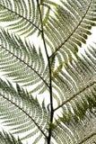 Le foglie di Ferm libero del terreno comunale Fotografia Stock Libera da Diritti