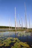 Le foglie di Lil-bugie dell'acqua asciugano Tress Westland Landscape Fotografie Stock