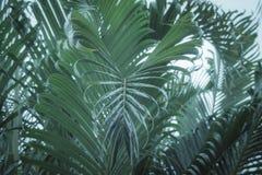 Le foglie di palma che gonfiano giù possono essere vedute come forma del cuore immagine stock