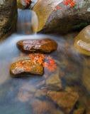Le foglie di rosso del ruscello Fotografie Stock Libere da Diritti