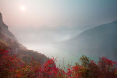 Le foglie di Three Gorges Fotografie Stock