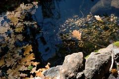 Le foglie di una quercia e delle ghiande è in acqua Fotografia Stock