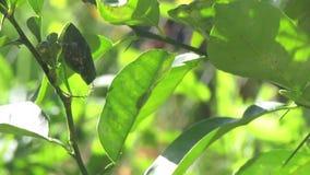 Le foglie di verde nel movimento stock footage