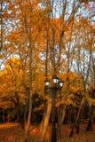 Le foglie dorate sul ramo, legno di autunno con il sole rays Immagine Stock Libera da Diritti