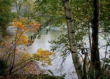 Le foglie e gli alberi di autunno circondano un lago Fotografia Stock