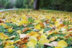Le foglie gialle e marroni cadute in autunno parcheggiano Fotografie Stock