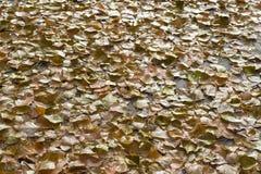 Le foglie gialle si trovano sul percorso di asfalto in un tappeto continuo alla luce Sfondo naturale fotografia stock libera da diritti