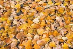 Le foglie gialle si trovano sul tappeto continuo del percorso di asfalto Sfondo naturale fotografie stock libere da diritti