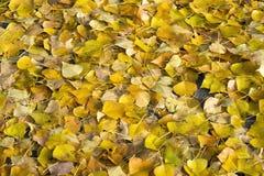 Le foglie gialle si trovano sul tappeto continuo del percorso di asfalto Sfondo naturale immagini stock