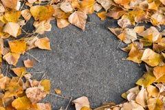 Le foglie gialle si trovano sul tappeto continuo del percorso di asfalto Sfondo naturale fotografia stock libera da diritti