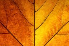Le foglie ingialliscono in autunno immagini stock