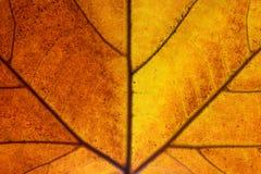 Le foglie ingialliscono in autunno fotografia stock libera da diritti