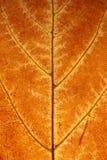 Le foglie ingialliscono in autunno fotografia stock