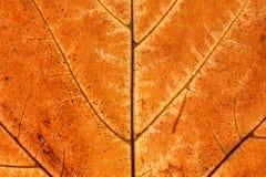 Le foglie ingialliscono in autunno immagine stock