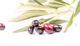 Le foglie mature della foglia matura delle olive hanno isolato il fondo del iwhite Fotografia Stock Libera da Diritti