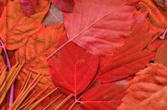 Le foglie modellano sul diario Immagine Stock Libera da Diritti