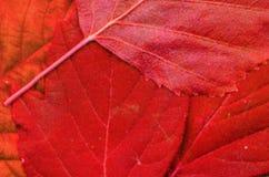 Le foglie modellano sul diario Immagine Stock