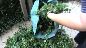 Le foglie nel giardino insaccano stock footage
