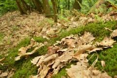 Le foglie nella foresta Immagine Stock