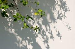 Le foglie ombreggiano sulla parete Fotografie Stock