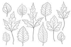 Le foglie profilano l'insieme Immagini Stock Libere da Diritti
