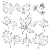 Le foglie profilano l'insieme Fotografia Stock