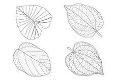 Le foglie scheletriche allineano la progettazione royalty illustrazione gratis