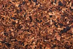 Le foglie secche del tubo di tabagismo Immagine Stock