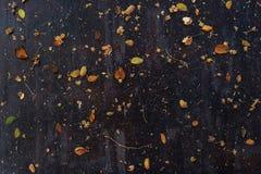 Le foglie secche hanno sparso sul piano d'appoggio di legno scuro immagine stock libera da diritti